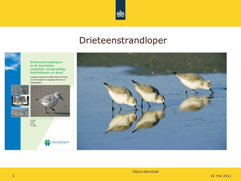 Rijkswaterstaat 318 mei 2011 Drieteenstrandloper