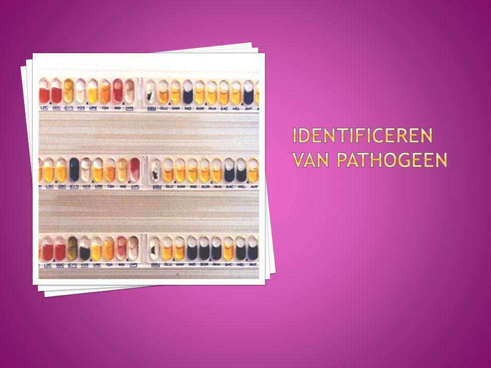  Het isoleren van pathogenen  Het identificeren van pathogenen  Het bepalen van de gevoeligheid voor antimicrobiële organismsen Biomedische kennis voor het MLO H3.5