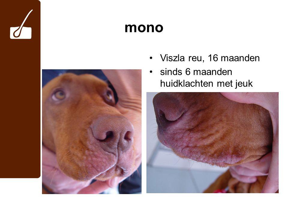 mono Viszla reu, 16 maanden sinds 6 maanden huidklachten met jeuk