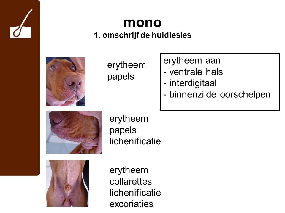 mono 1.