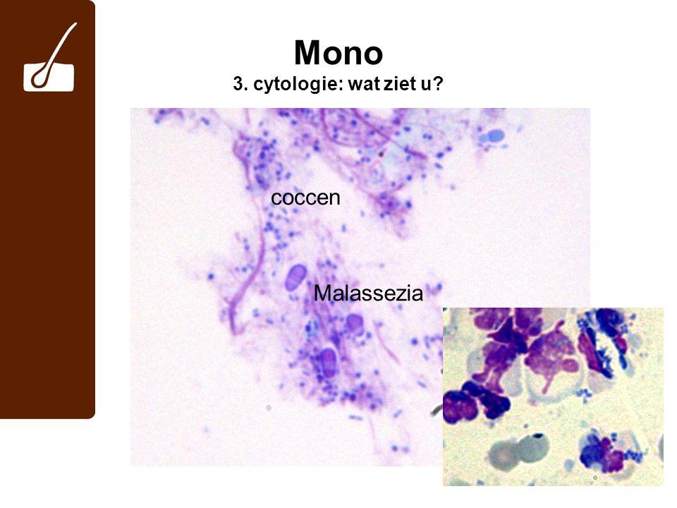 Mono 3. cytologie: wat ziet u? Malassezia coccen