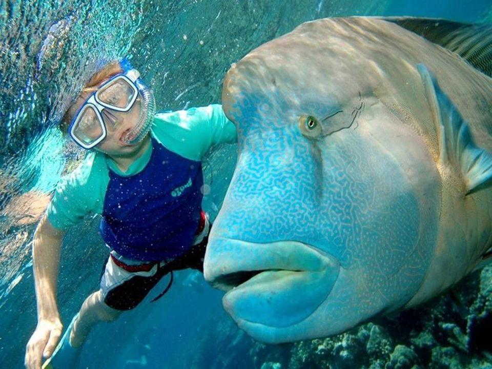 Ook met uitsterven bedreigd zijn de daar levende dugongs (zeekoeien). Verder worden deze warme wateren door walvissoorten, o.a. door de in Antarctica