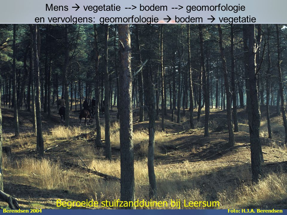 Aardwetenschappen Begroeide stuifzandduinen bij Leersum Foto: H.J.A.