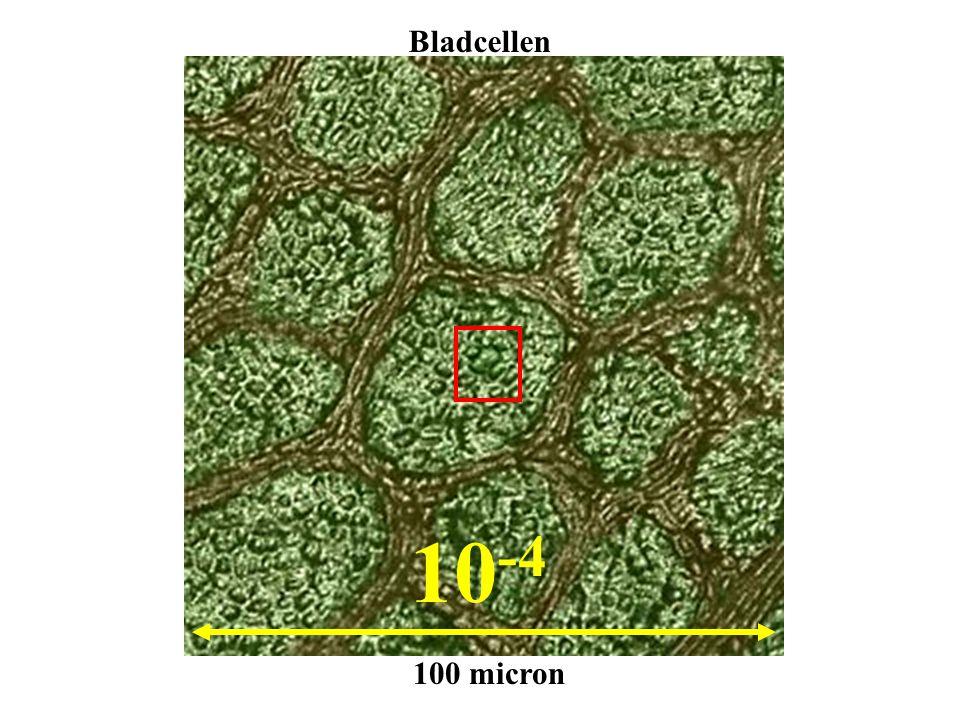 10 -4 100 micron Bladcellen