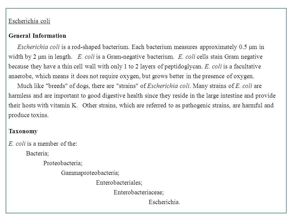 Escherichia coli General Information Escherichia coli is a rod-shaped bacterium.