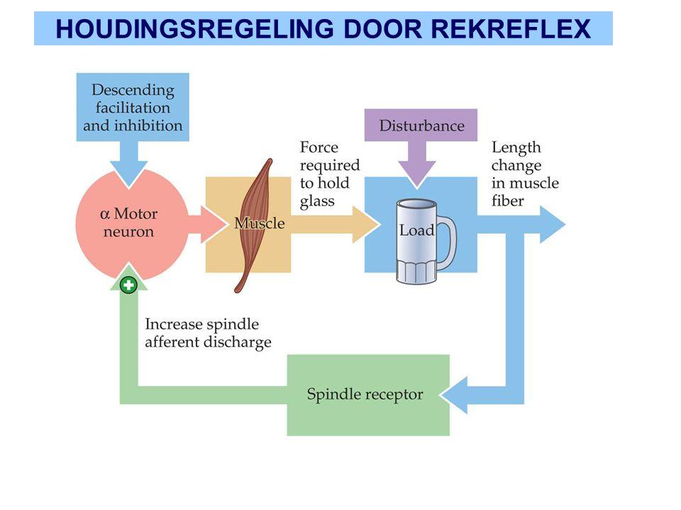 HOUDINGSREGELING DOOR REKREFLEX
