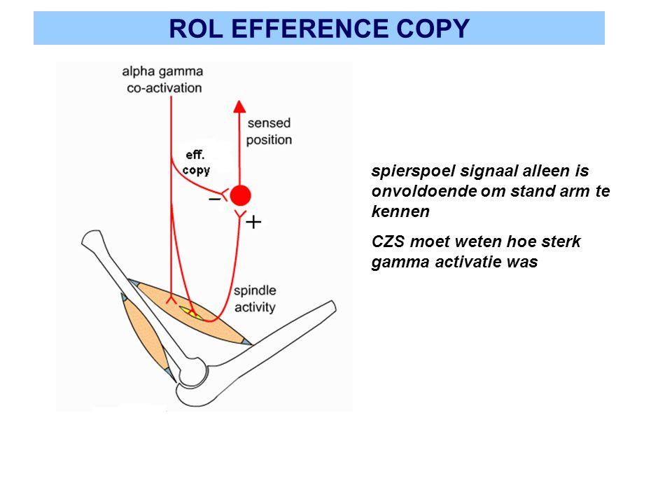 ROL EFFERENCE COPY spierspoel signaal alleen is onvoldoende om stand arm te kennen CZS moet weten hoe sterk gamma activatie was