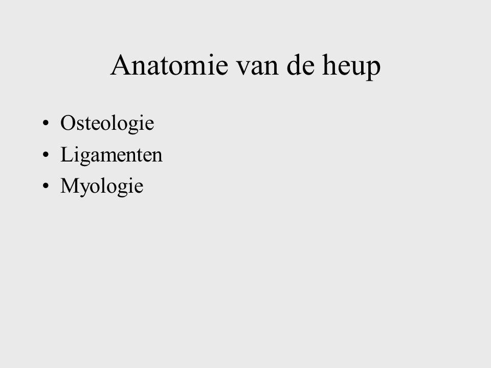 Anatomie van de heup Osteologie Ligamenten Myologie