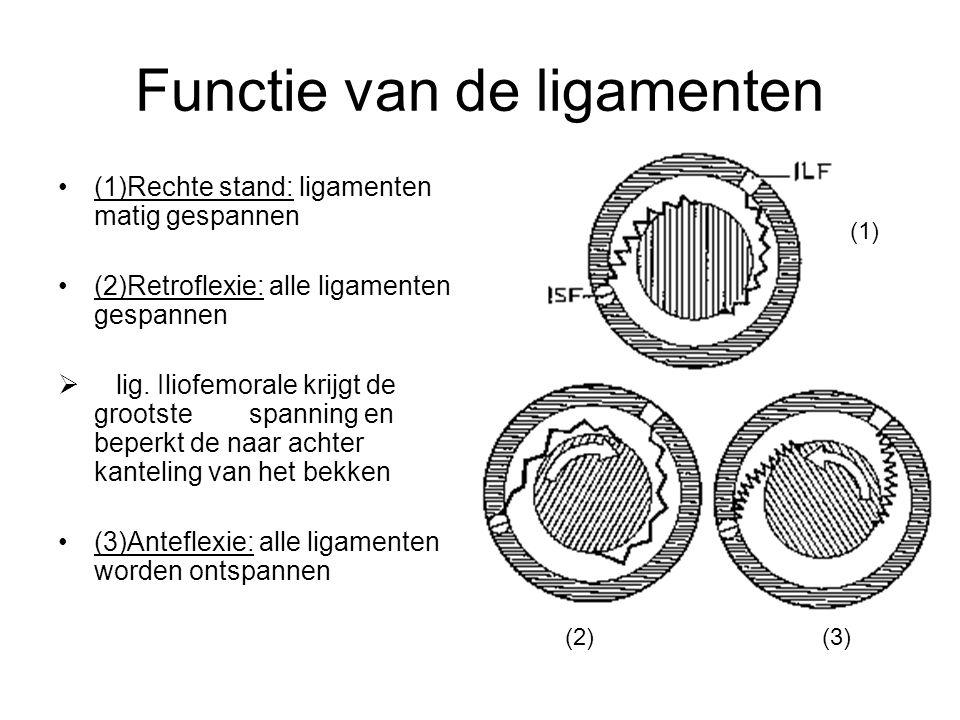Functie van de ligamenten (1)Rechte stand: ligamenten matig gespannen (2)Retroflexie: alle ligamenten gespannen  lig. Iliofemorale krijgt de grootste