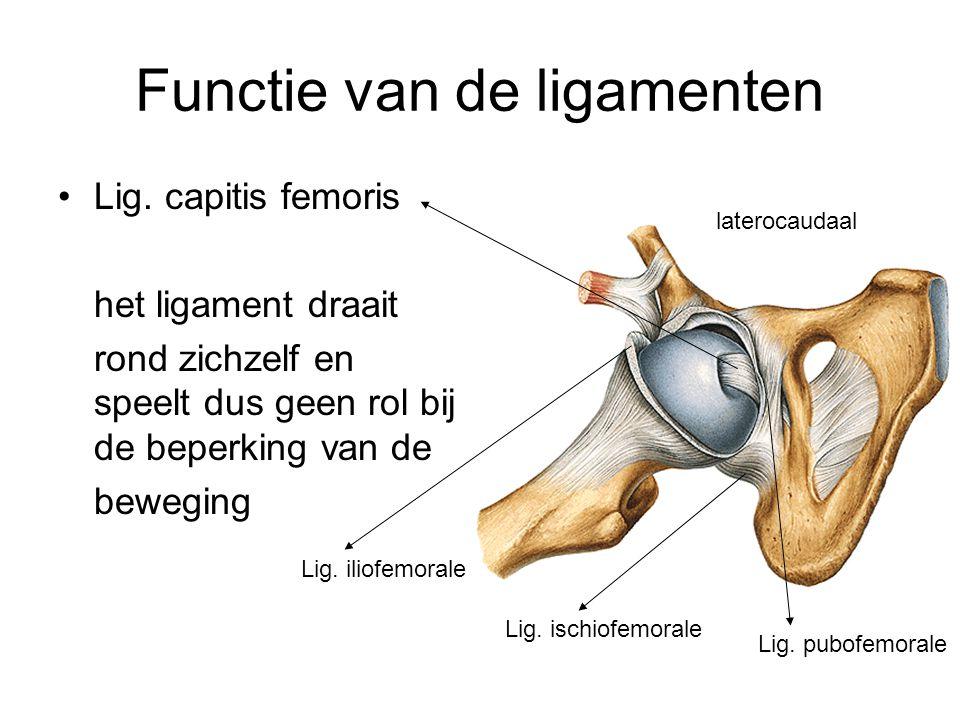 Functie van de ligamenten Lig. capitis femoris het ligament draait rond zichzelf en speelt dus geen rol bij de beperking van de beweging Lig. iliofemo