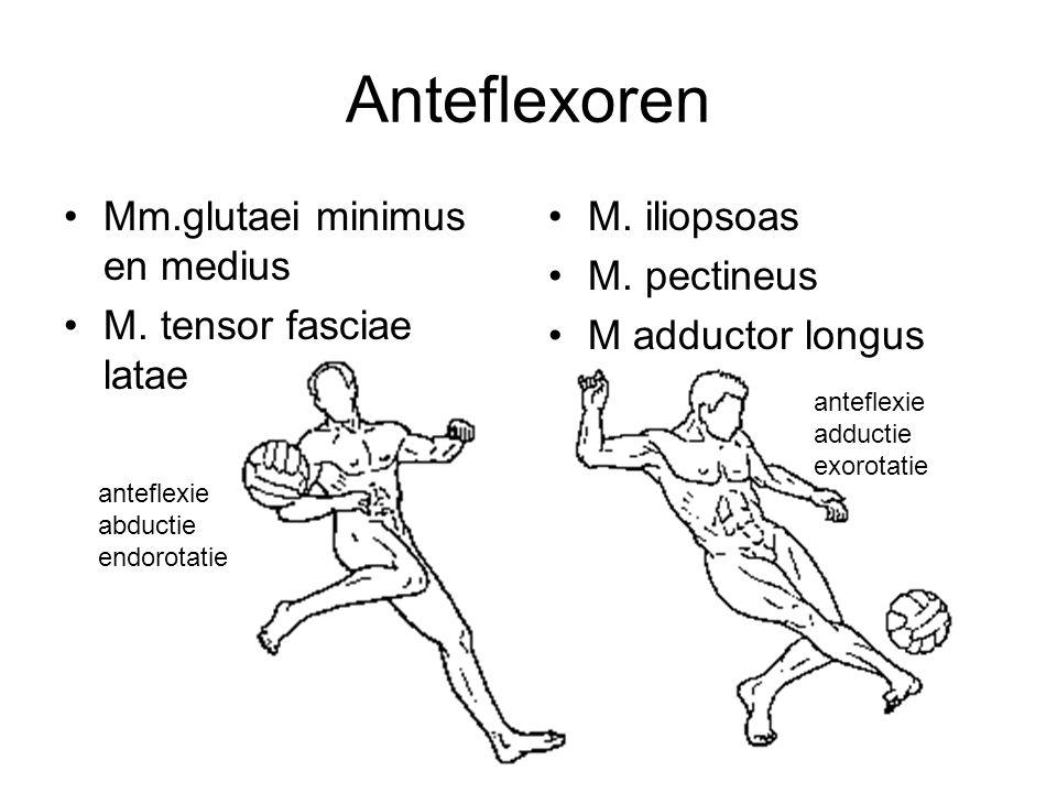 Anteflexoren Mm.glutaei minimus en medius M. tensor fasciae latae M. iliopsoas M. pectineus M adductor longus anteflexie adductie exorotatie anteflexi