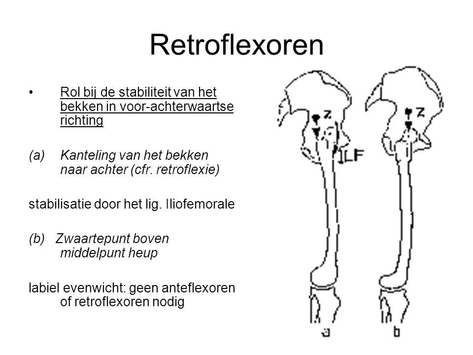 Retroflexoren Rol bij de stabiliteit van het bekken in voor-achterwaartse richting (a)Kanteling van het bekken naar achter (cfr. retroflexie) stabilis
