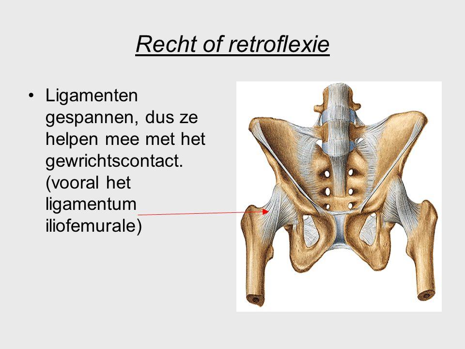 Recht of retroflexie Ligamenten gespannen, dus ze helpen mee met het gewrichtscontact. (vooral het ligamentum iliofemurale)