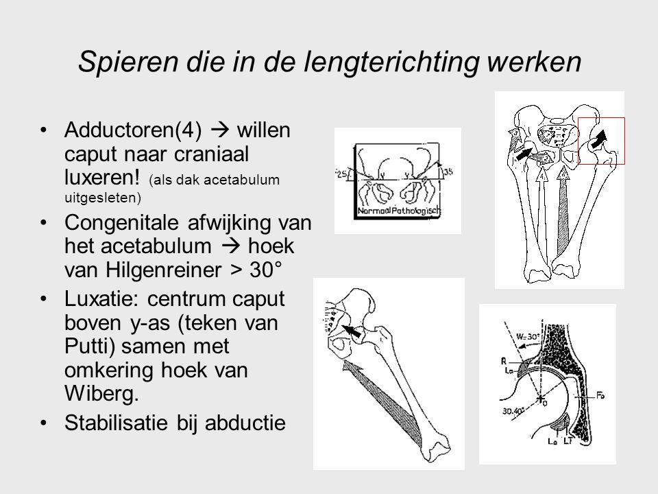 Spieren die in de lengterichting werken Adductoren(4)  willen caput naar craniaal luxeren! (als dak acetabulum uitgesleten) Congenitale afwijking van