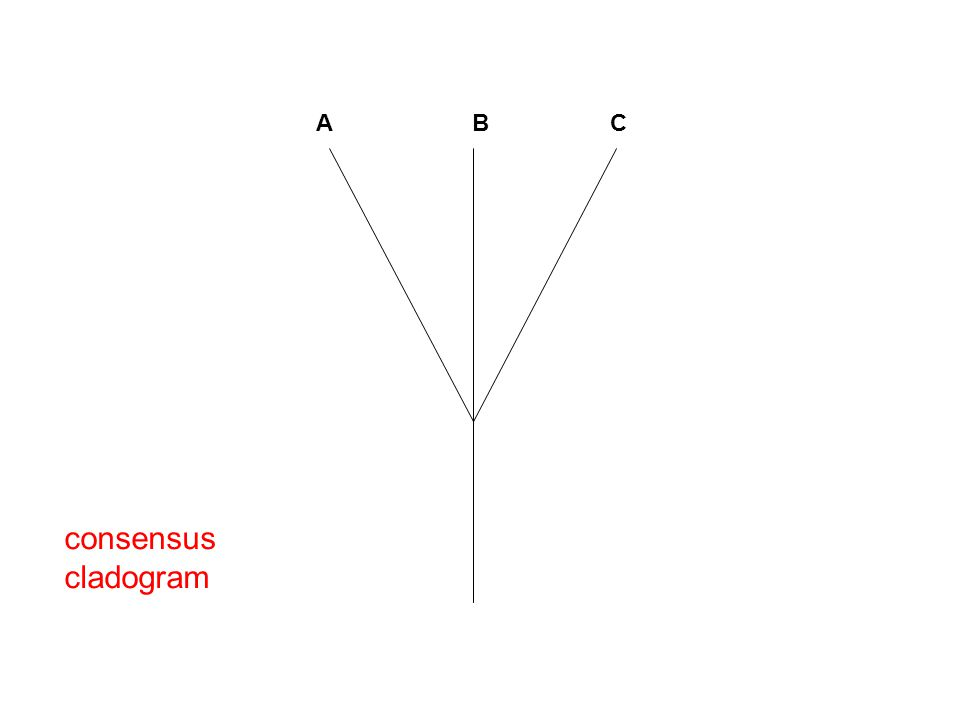 consensus cladogram