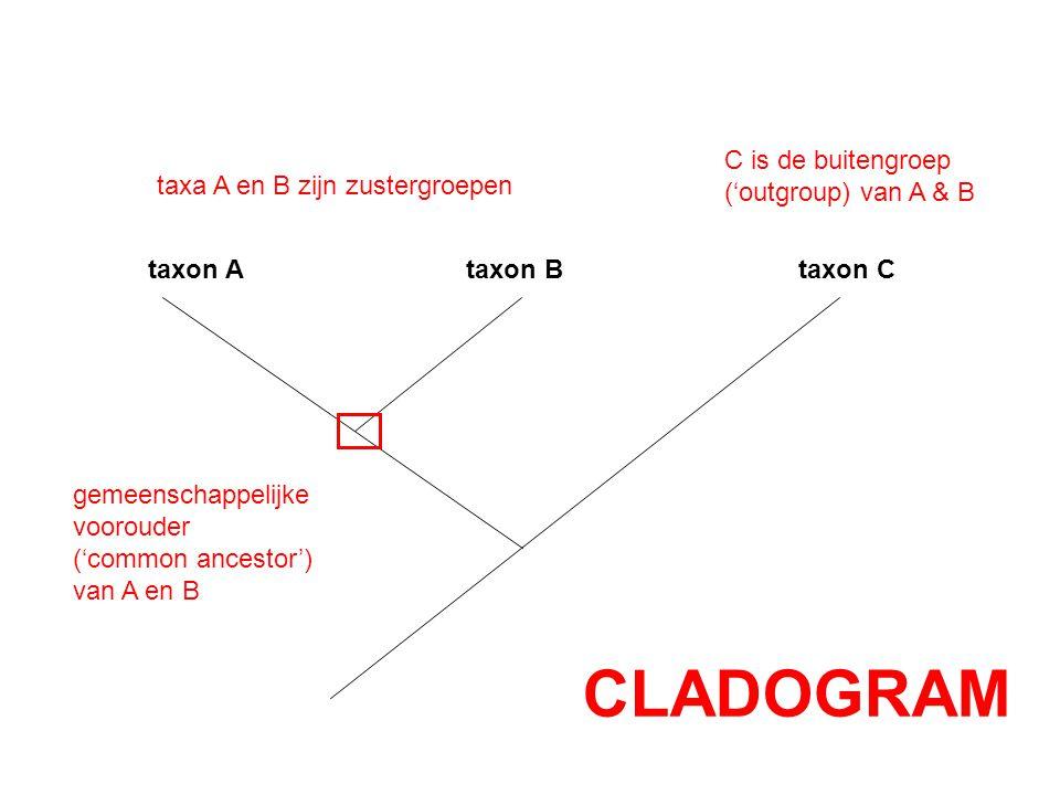 taxon A taxon B taxon C taxa A en B zijn zustergroepen C is de buitengroep ('outgroup) van A & B gemeenschappelijke voorouder ('common ancestor') van