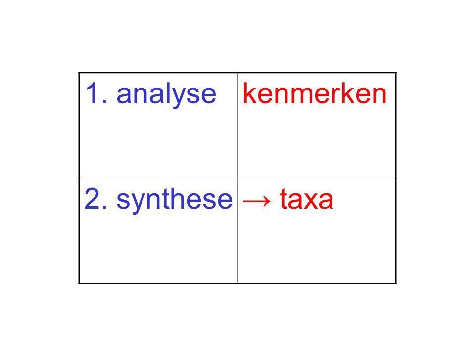 1. analysekenmerken 2. synthese→ taxa