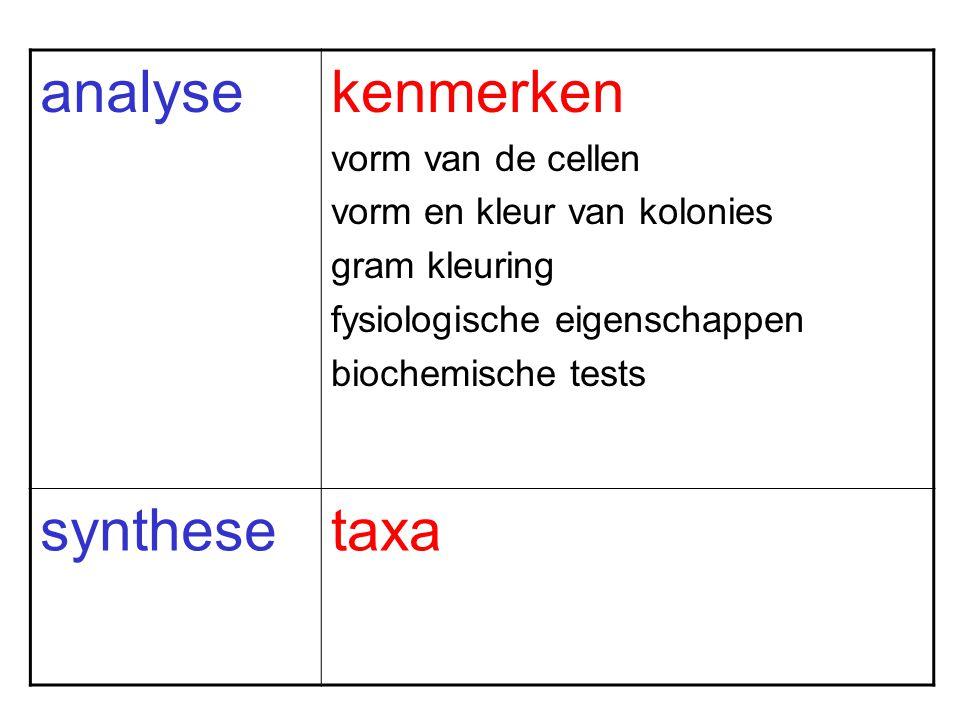 analysekenmerken vorm van de cellen vorm en kleur van kolonies gram kleuring fysiologische eigenschappen biochemische tests synthesetaxa