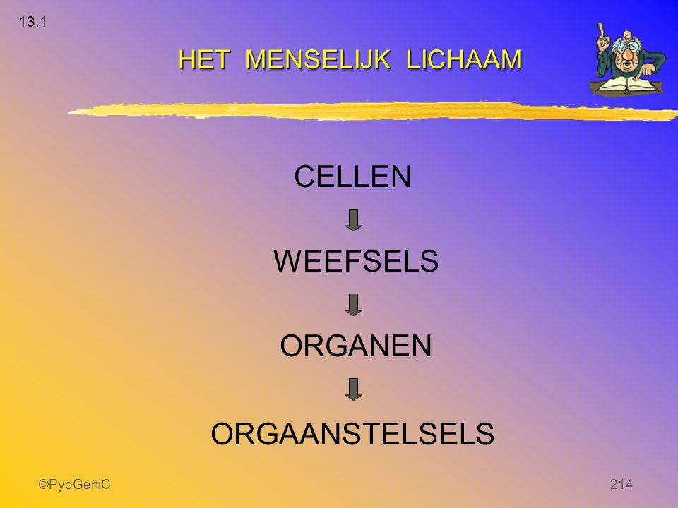 ©PyoGeniC214 WEEFSELS CELLEN ORGANEN ORGAANSTELSELS HET MENSELIJK LICHAAM 13.1