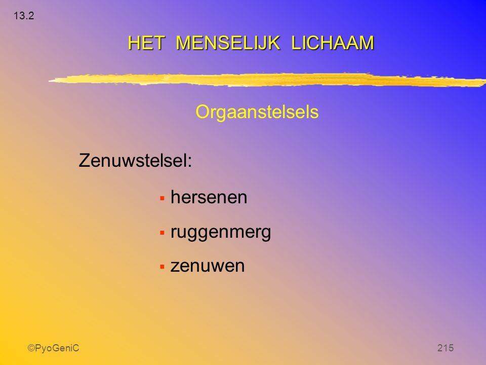 ©PyoGeniC215 Orgaanstelsels Zenuwstelsel:  hersenen  ruggenmerg  zenuwen HET MENSELIJK LICHAAM 13.2