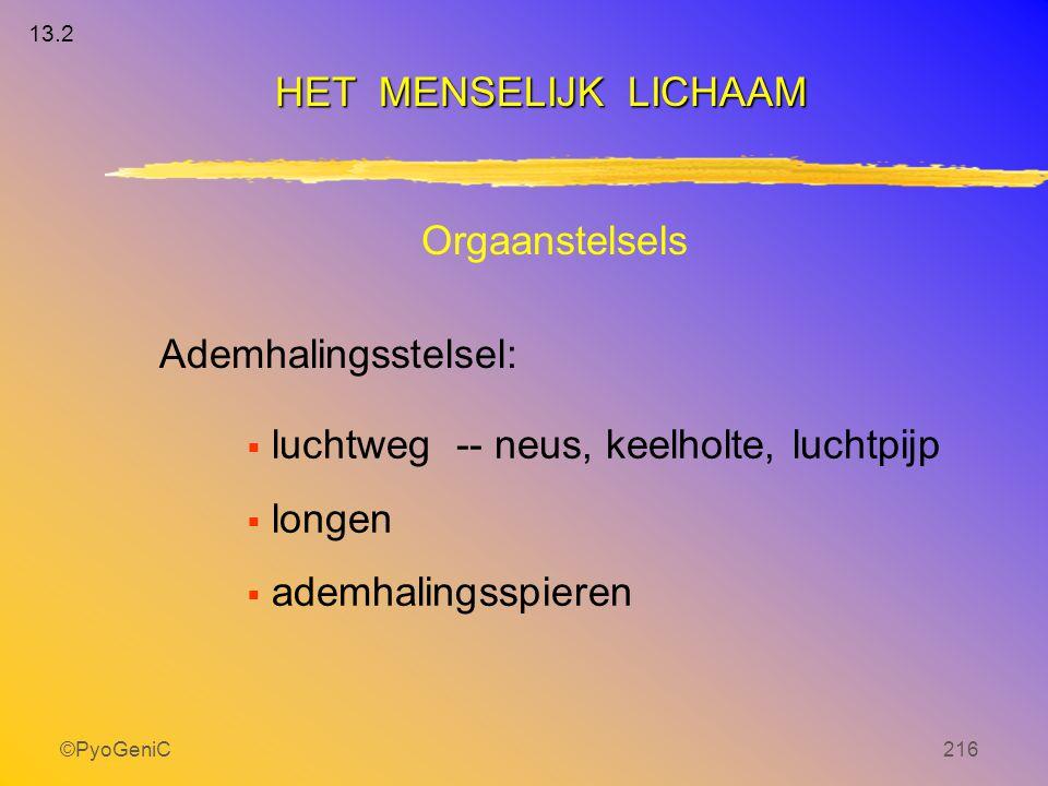 ©PyoGeniC216 Orgaanstelsels Ademhalingsstelsel:  luchtweg-- neus, keelholte, luchtpijp  longen  ademhalingsspieren HET MENSELIJK LICHAAM 13.2