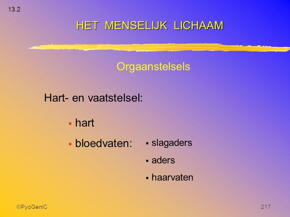 ©PyoGeniC217 Orgaanstelsels Hart- en vaatstelsel:  hart  bloedvaten:  slagaders  aders  haarvaten HET MENSELIJK LICHAAM 13.2