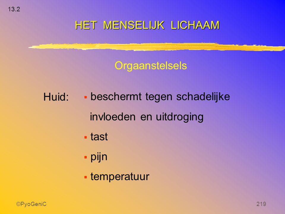 ©PyoGeniC219 Orgaanstelsels Huid:  beschermt tegen schadelijke invloeden en uitdroging  tast  pijn  temperatuur HET MENSELIJK LICHAAM 13.2