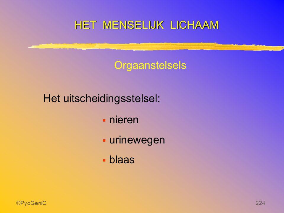 ©PyoGeniC224 Het uitscheidingsstelsel:  nieren  urinewegen  blaas HET MENSELIJK LICHAAM Orgaanstelsels