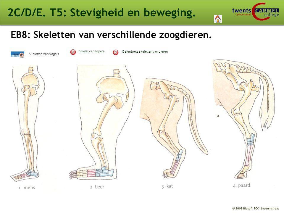 © 2009 Biosoft TCC - Lyceumstraat 2C/D/E. T5: Stevigheid en beweging. EB8: Skeletten van verschillende zoogdieren. Skeletten van vogels Oefentoets ske
