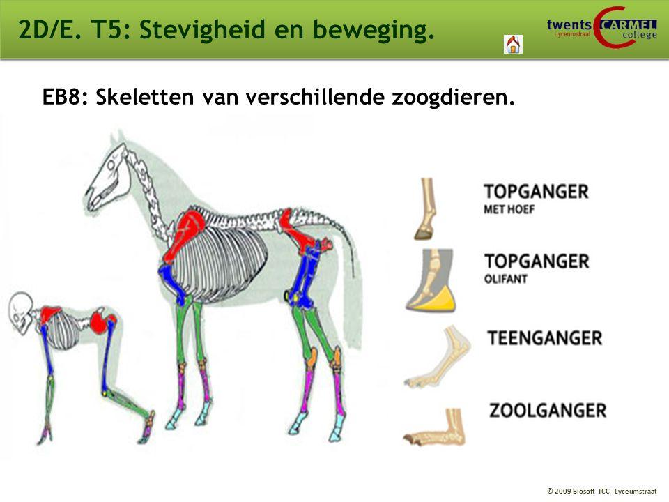 © 2009 Biosoft TCC - Lyceumstraat 2D/E. T5: Stevigheid en beweging. EB8: Skeletten van verschillende zoogdieren.