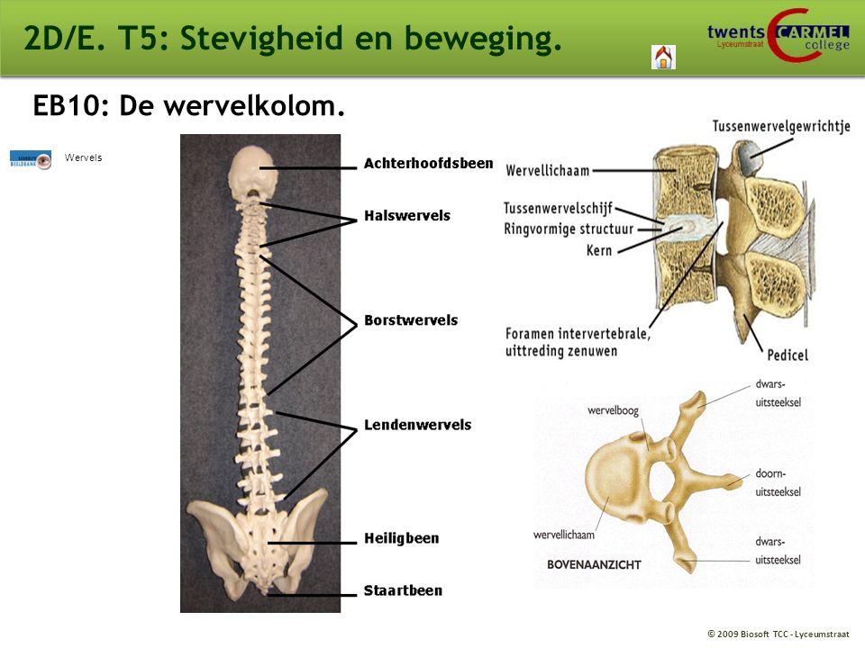 © 2009 Biosoft TCC - Lyceumstraat 2D/E. T5: Stevigheid en beweging. EB10: De wervelkolom. Wervels