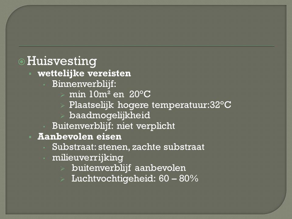  Huisvesting  wettelijke vereisten Binnenverblijf:  min 10m² en 20°C  Plaatselijk hogere temperatuur:32°C  baadmogelijkheid Buitenverblijf: niet
