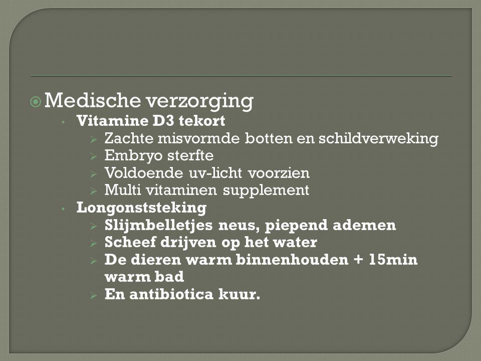  Medische verzorging Vitamine D3 tekort  Zachte misvormde botten en schildverweking  Embryo sterfte  Voldoende uv-licht voorzien  Multi vitaminen