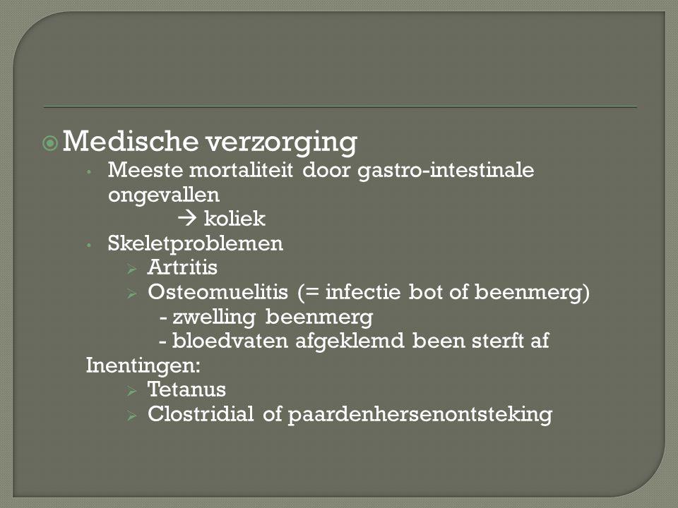  Medische verzorging Meeste mortaliteit door gastro-intestinale ongevallen  koliek Skeletproblemen  Artritis  Osteomuelitis (= infectie bot of bee