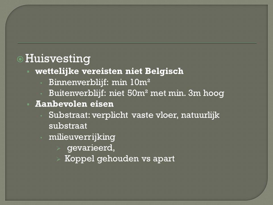  Huisvesting  wettelijke vereisten niet Belgisch Binnenverblijf: min 10m² Buitenverblijf: niet 50m² met min. 3m hoog  Aanbevolen eisen Substraat: v
