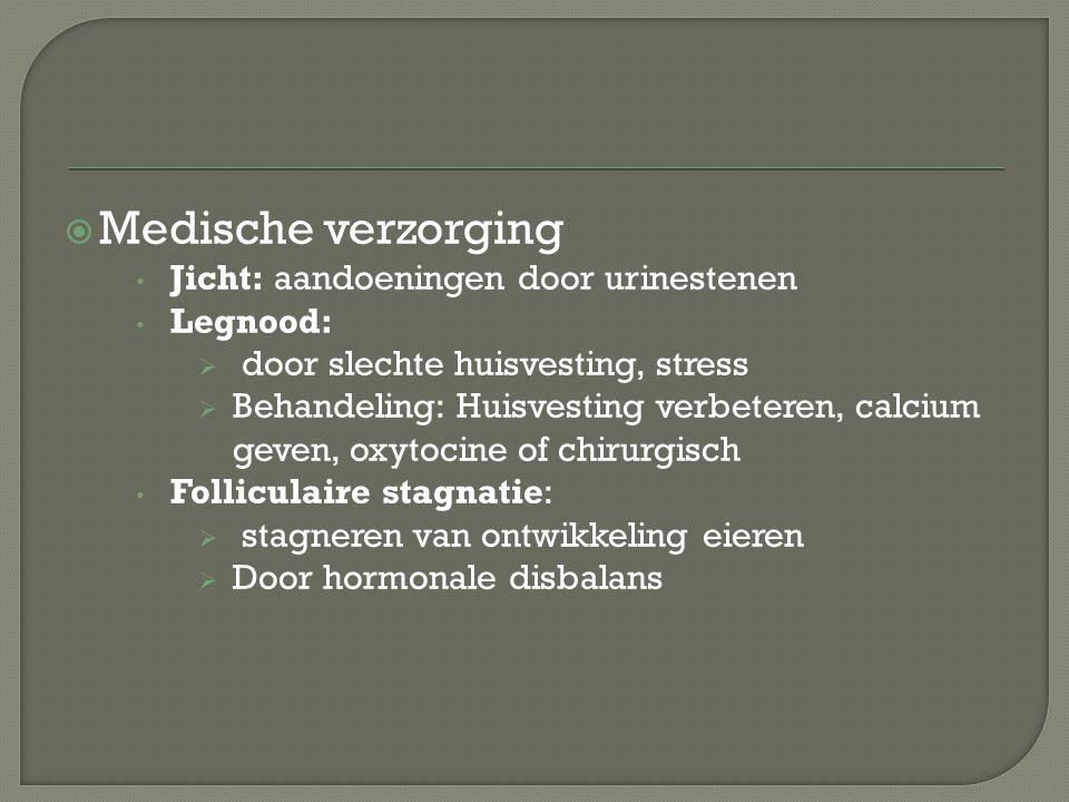  Medische verzorging Jicht: aandoeningen door urinestenen Legnood:  door slechte huisvesting, stress  Behandeling: Huisvesting verbeteren, calcium