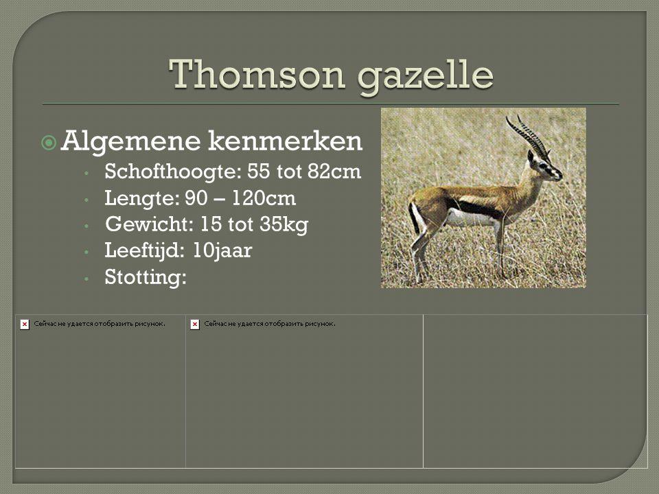  Algemene kenmerken Schofthoogte: 55 tot 82cm Lengte: 90 – 120cm Gewicht: 15 tot 35kg Leeftijd: 10jaar Stotting: