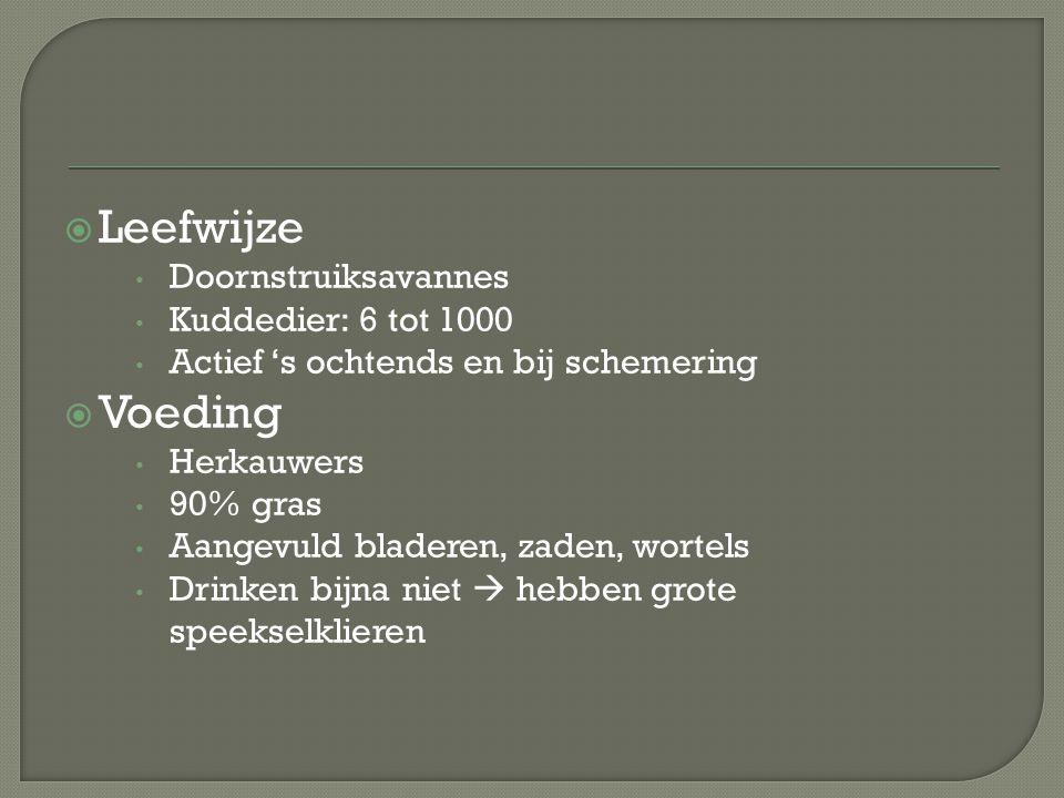  Leefwijze Doornstruiksavannes Kuddedier: 6 tot 1000 Actief 's ochtends en bij schemering  Voeding Herkauwers 90% gras Aangevuld bladeren, zaden, wo