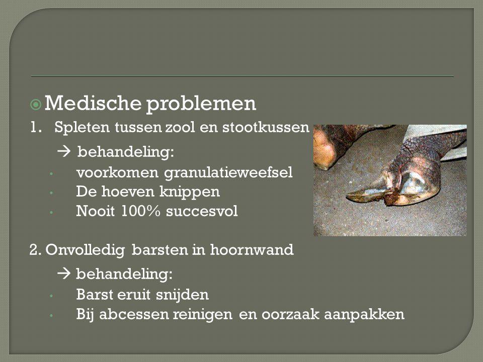  Medische problemen 1. Spleten tussen zool en stootkussen  behandeling: voorkomen granulatieweefsel De hoeven knippen Nooit 100% succesvol 2. Onvoll