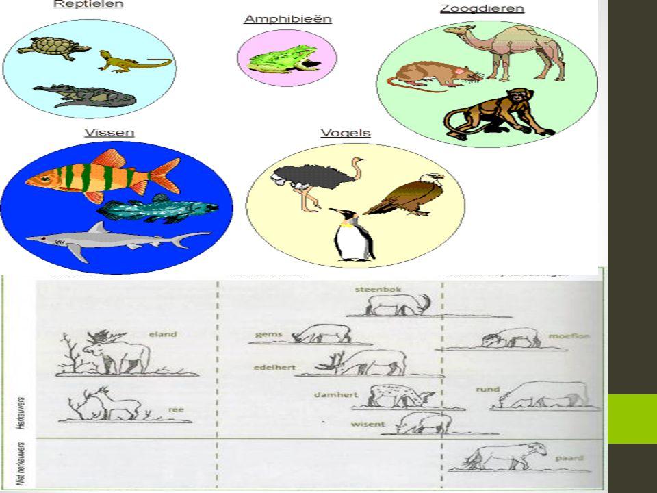 Allemaal beestjes… ABC over dieren Schrijf het alfabet op in groepjes van vier of drie Probeer bij elke letter een dier te schrijven We proberen de di