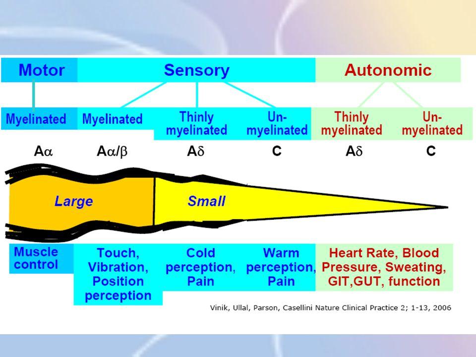 Neuropathie bij diabetes Behandeling Topische preparaten TENS = Transcute elektrische zenuwstimulatie Bewezen efficiënt maar vaak ook slechts voorbijgaand effect Best in combinatie met tricyclische middelen zoals Redomex