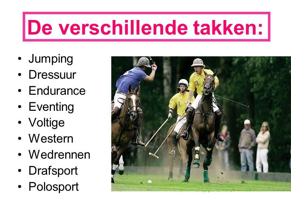 De verschillende takken: Jumping Dressuur Endurance Eventing Voltige Western Wedrennen Drafsport Polosport