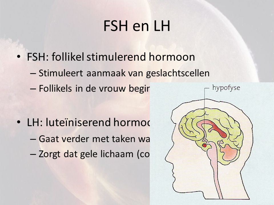 FSH en LH FSH: follikel stimulerend hormoon – Stimuleert aanmaak van geslachtscellen – Follikels in de vrouw beginnen te groeien LH: luteïniserend hor