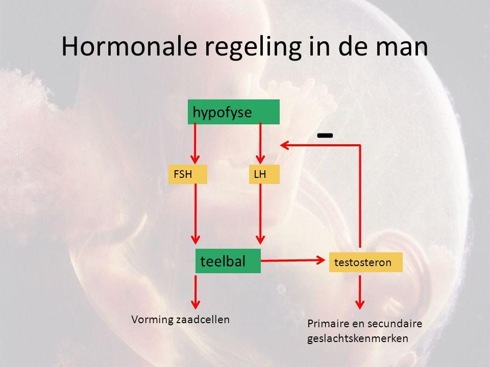 Hormonale regeling in de vrouw hypofyse FSH follikel oestrogenen Secundaire geslachtskenmerken + Extra vochtopname Vanaf menstruatie tot ovulatie LH rijping Dikkere baarmoederwand Follikel springt kapot: ovulatie