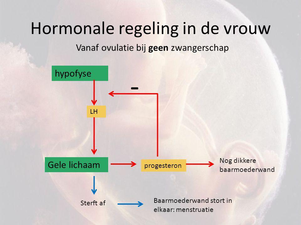 Hormonale regeling in de vrouw hypofyse LH Gele lichaam - Vanaf ovulatie bij wel zwangerschap progesteron Nog dikkere baarmoederwand bevruchting Embryo Baarmoederwand blijft in stand HCG