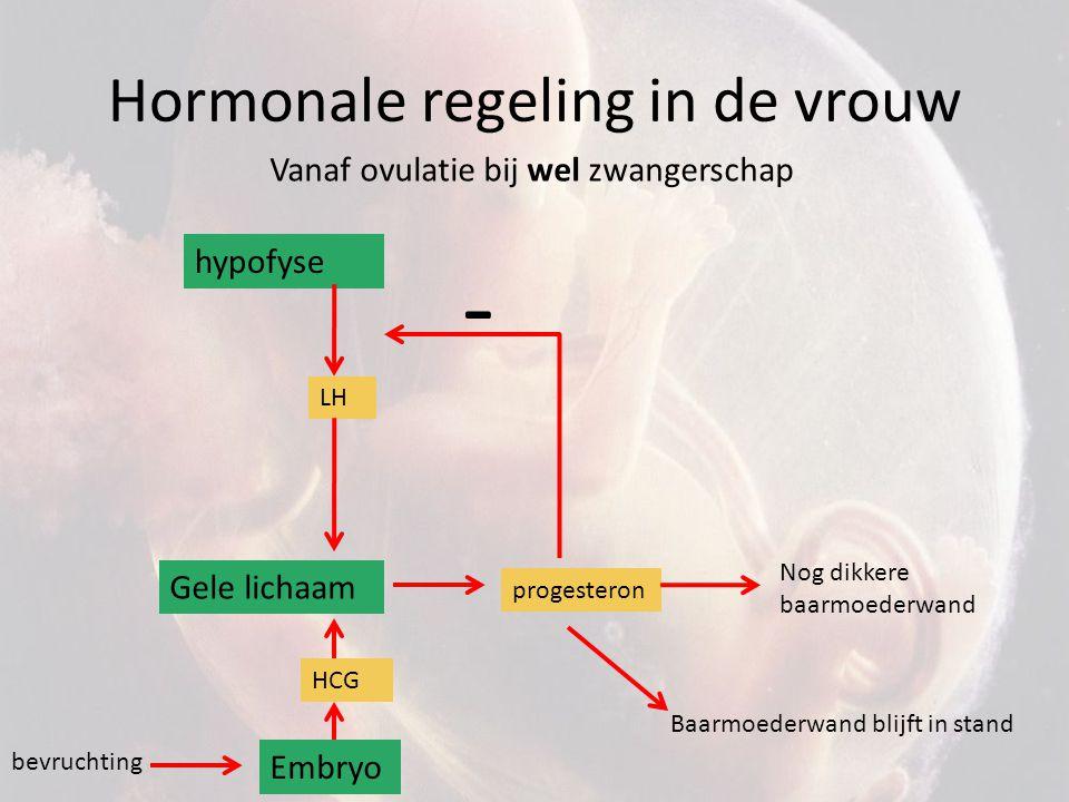 Hormonale regeling in de vrouw hypofyse LH Gele lichaam - Vanaf ovulatie bij wel zwangerschap progesteron Nog dikkere baarmoederwand bevruchting Embry