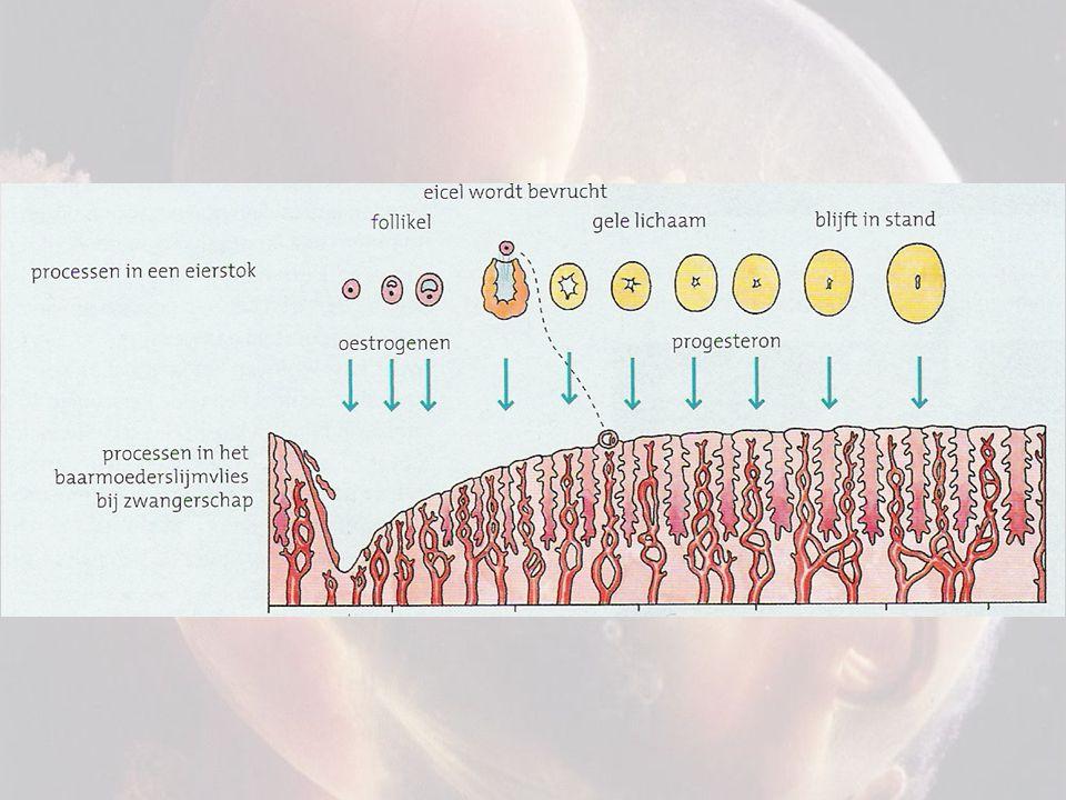 Les 2: Leerdoelen Wat zijn FSH en LH.Hoe werkt de hormonale regeling in een man.