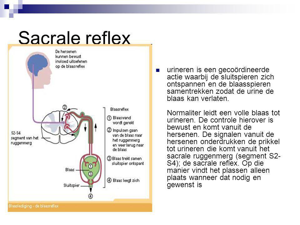 Sacrale reflex urineren is een gecoördineerde actie waarbij de sluitspieren zich ontspannen en de blaasspieren samentrekken zodat de urine de blaas ka