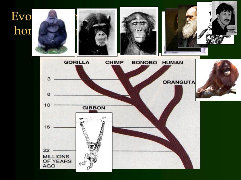 Evolutionaire benadering: Mens is dierMens is dier Kijk ook naar niet- humane primatenKijk ook naar niet- humane primaten