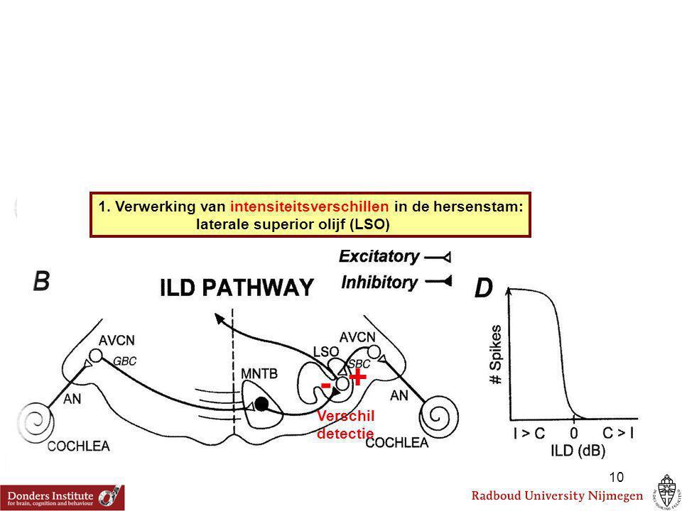 Verschil detectie + - 1. Verwerking van intensiteitsverschillen in de hersenstam: laterale superior olijf (LSO) 10